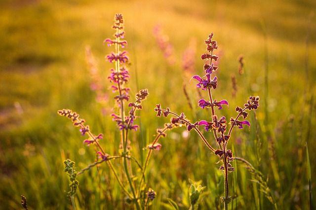 hoa dại đẹp nhất 11