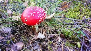 Kuvahaun tulos haulle syö vain sieniä jotka tunnet