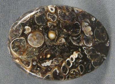 Agata turritela con inclusiones fosiles