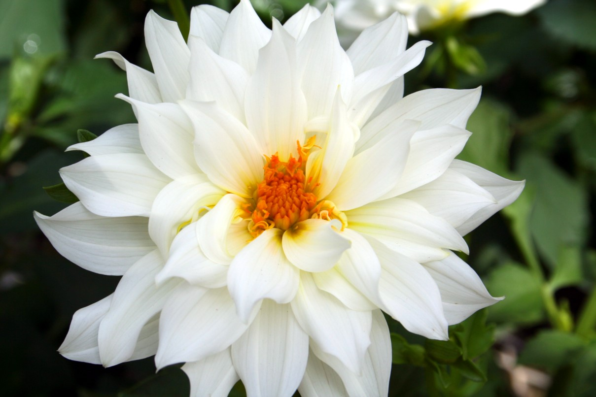 Flower Homes: Beautiful White Flowers