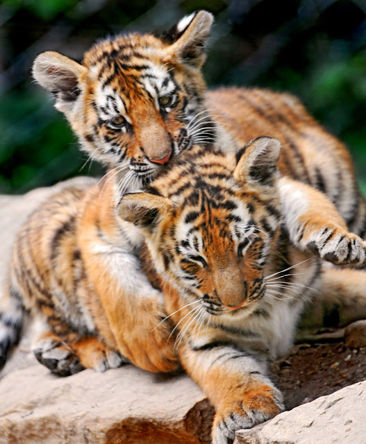 «I'm holding you tight!» by Tambako the Jaguar from flickr (CC-ND)