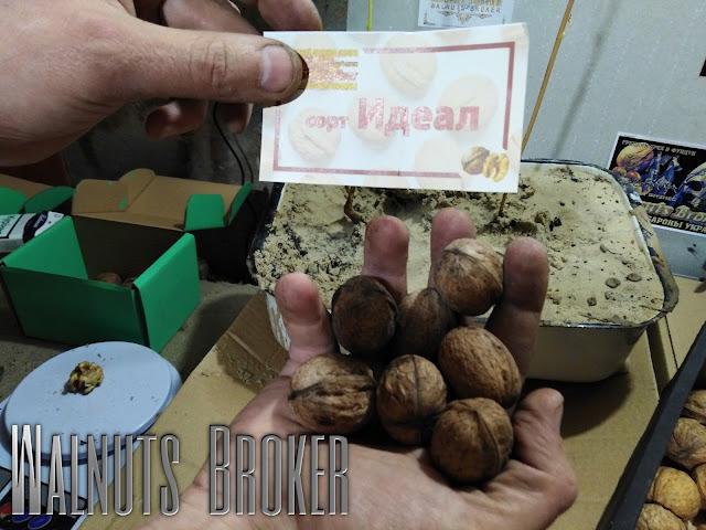 Саженцы ореха Идеал Украина, 0957351986, 0985674877, Walnuts Broker
