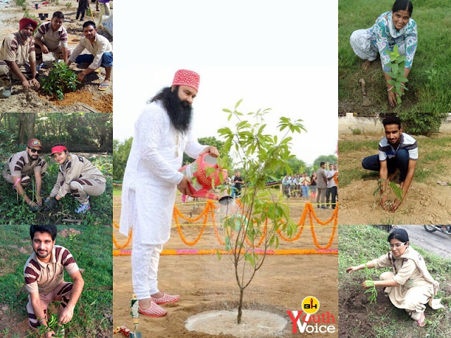 Photo With Tree Tree Plantation India Worldwide Dera Sacha Sauda Green S Welfare Force Volunteers in Hindi Birthday Celebration Saint Dr. Gurmeet Ram Rahim Singh Ji Insan
