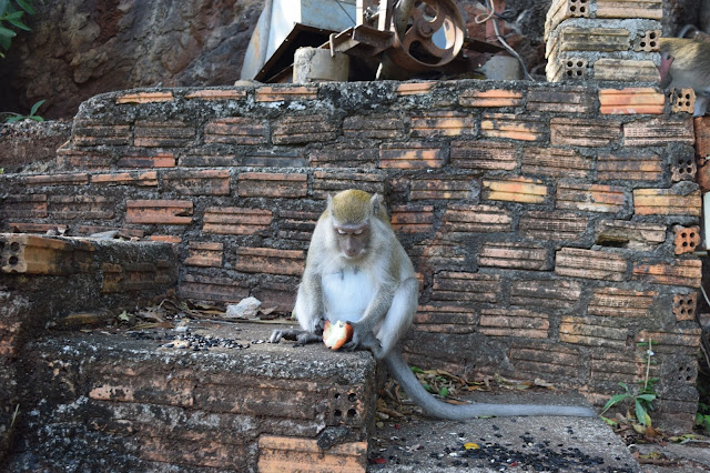 Tiger Cave Temple wild monkey