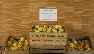 jabłka, jedz jabłka