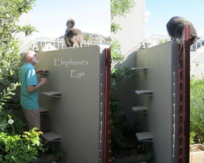 Katzenleiter Cat ladder