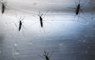 Military Discloses At Least 11 Troops Infected With Zika Virus This Year