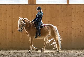 A Chestnut horse being ridden at walk in a indoor school