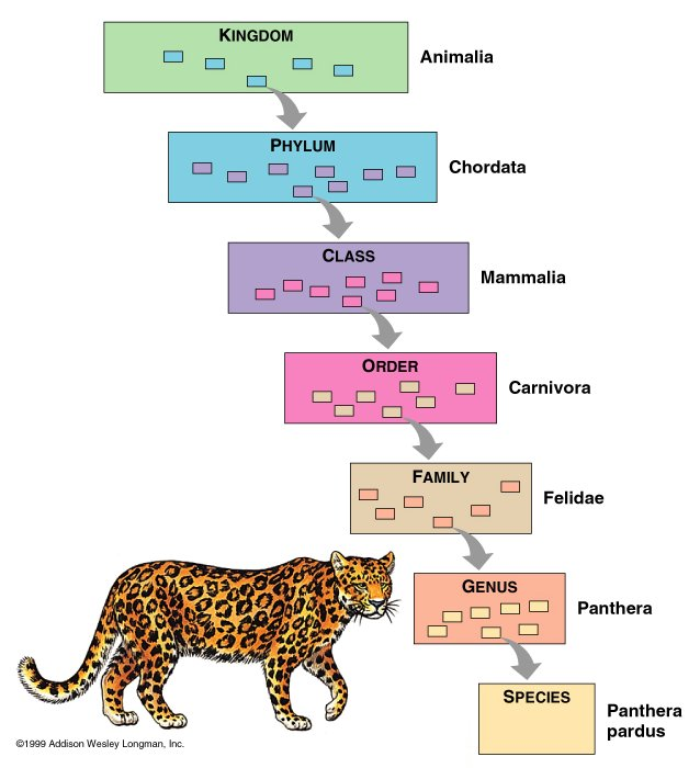 animal kingdom diagram - photo #7