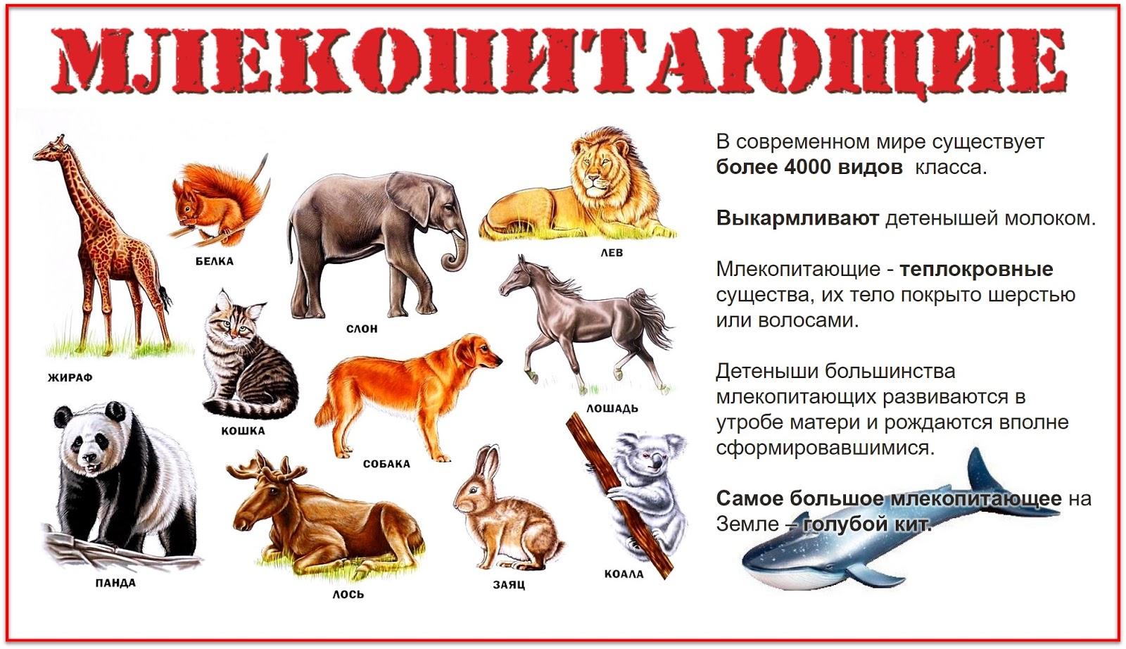 название групп животных с картинками для путешествующих бизнесменов