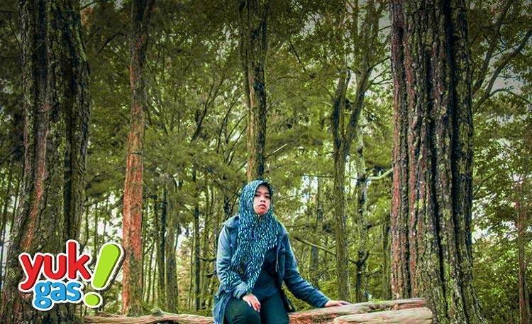 Objek Wisata Hutan Pinus Kudus Taman Kajar Dawe Yukgas