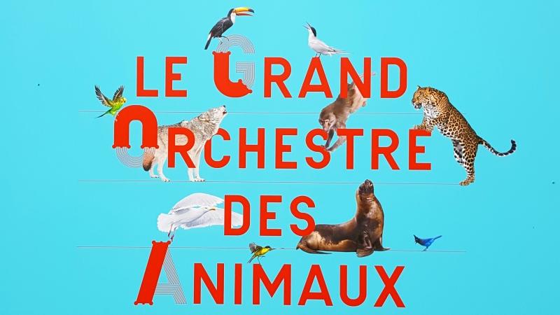 Exposição A orquestra dos animais