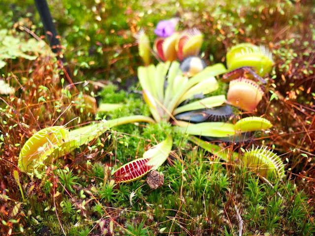 Duthie Park Winter Gardens, Aberdeen, Scotland