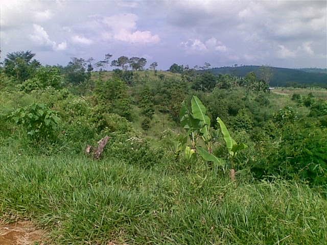 Foto(5378) Jual Tanah Murah Luas 130 Ha, Harga 50.000 Di Puncak Jual tanah di cipanas jual tanah di puncak