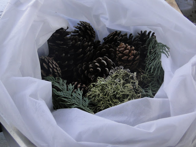 pine cones and lichens