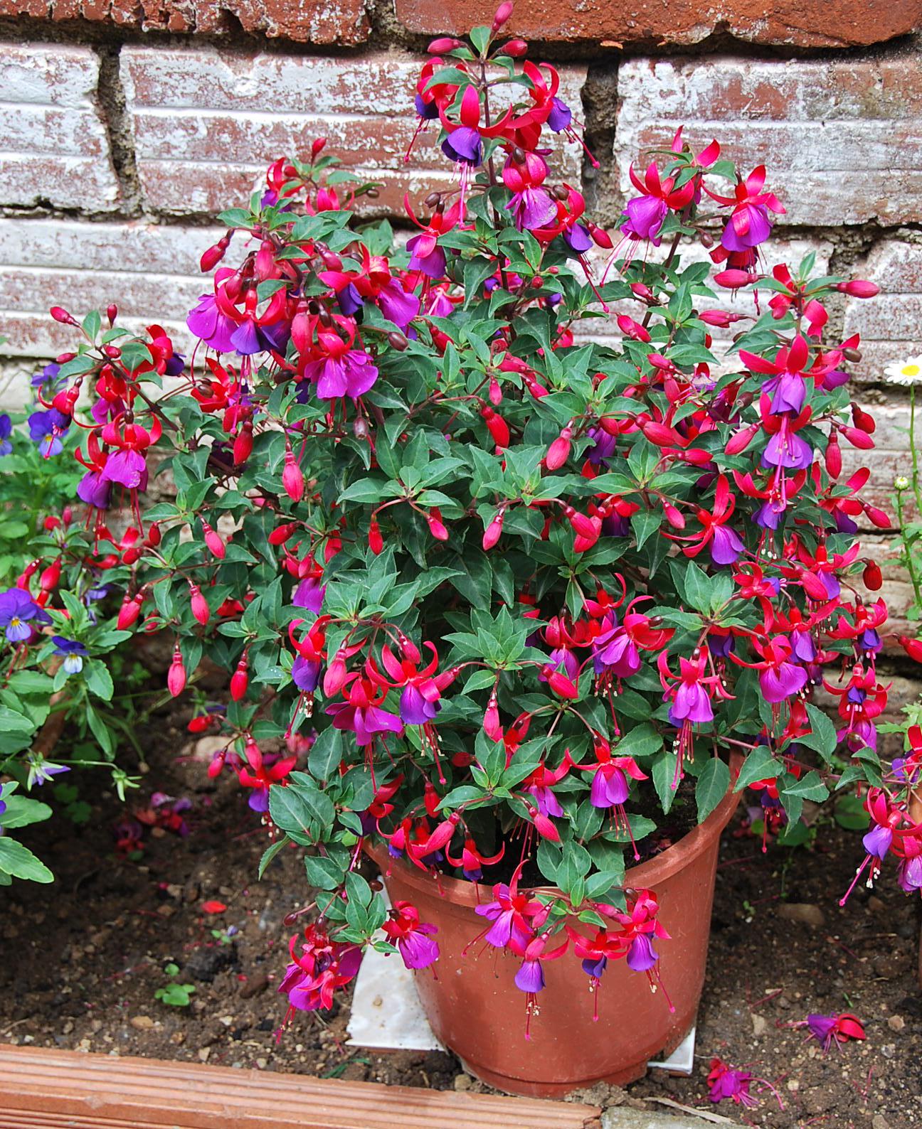 Plantas de exterior resistentes al calor grosir baju - Plantas de exterior resistentes al sol ...