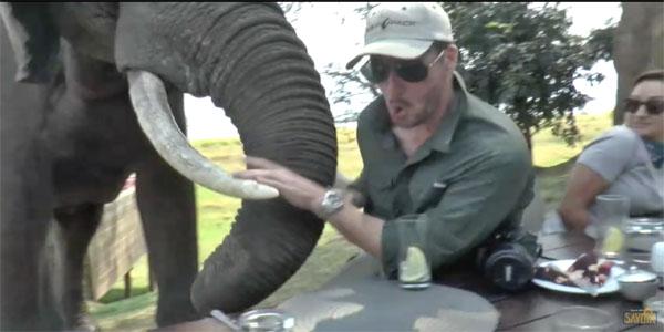 Un éléphant en colère ramène ses défenses dans des touristes en train de dîner au parc national.