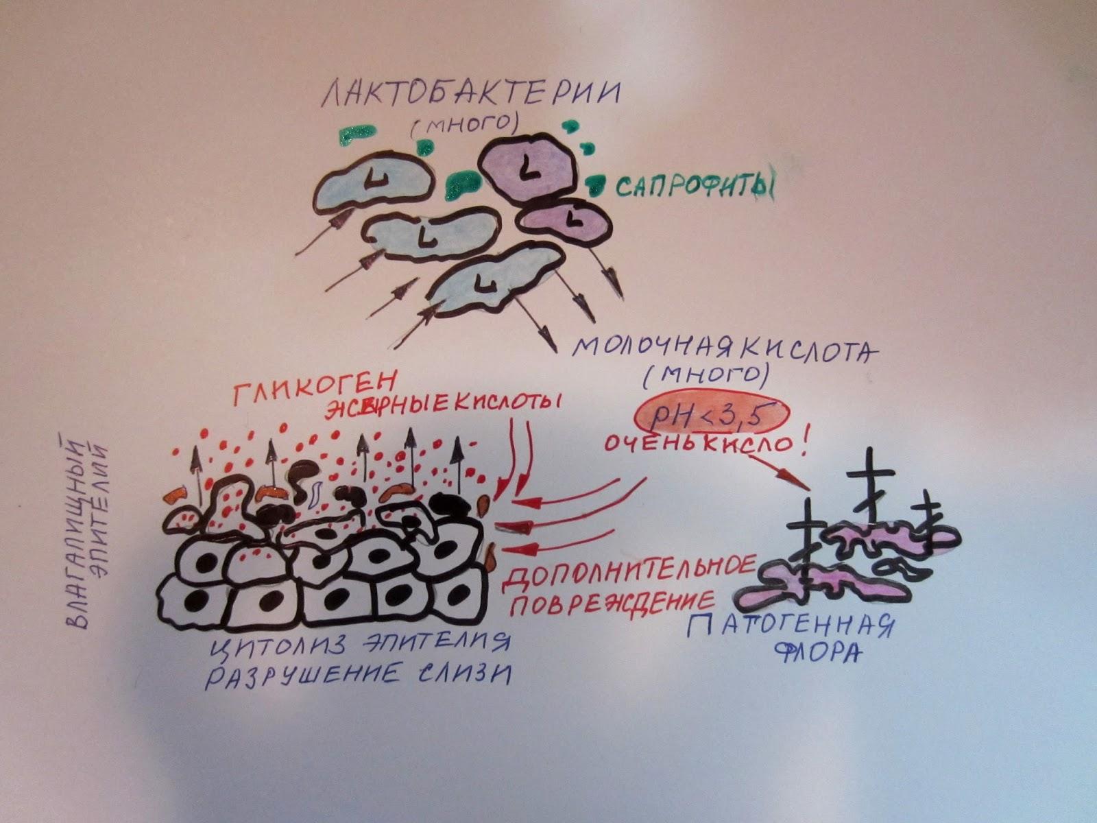 Отслойка плаценты и оргазм клиторальный