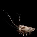 Criaturas del planeta Val-Dor II ~Spore Galaxies: The Fallen Rastrero%2Bacorazado%2B2