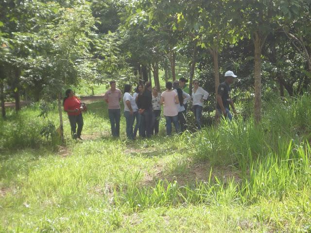 Resultado de imagem para foto do bosque da avenida 25 de agosto rolim de moura