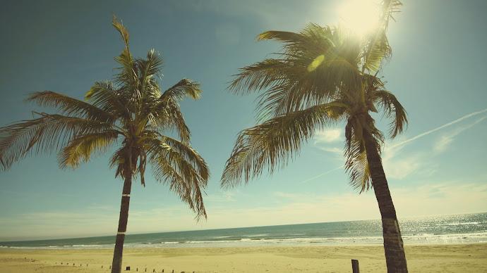 Wallpaper: Sunny, Ocean Breeze, Palm Trees