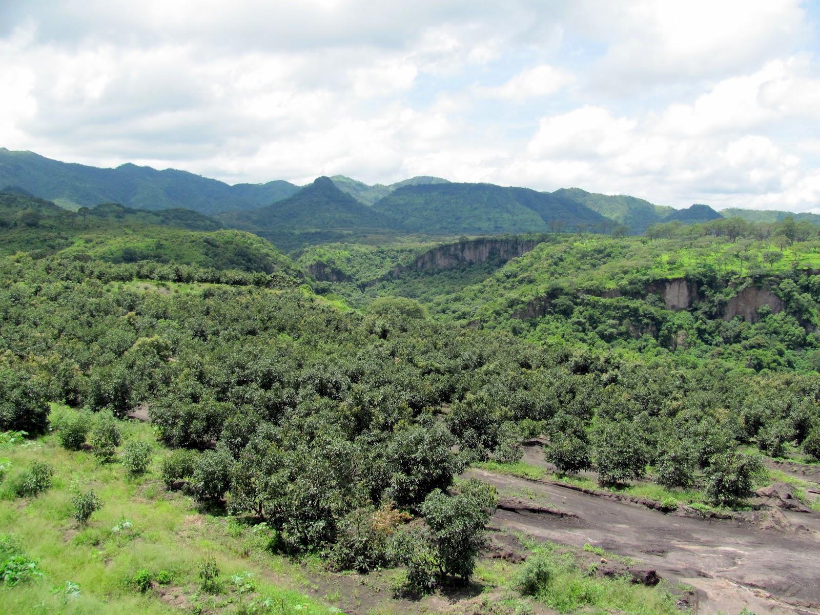 xesvalencia los suelos de origen volc nico tienen