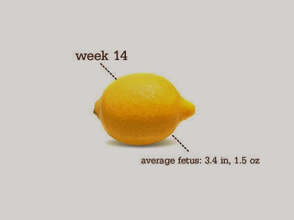 14 Weeks Pregnant!