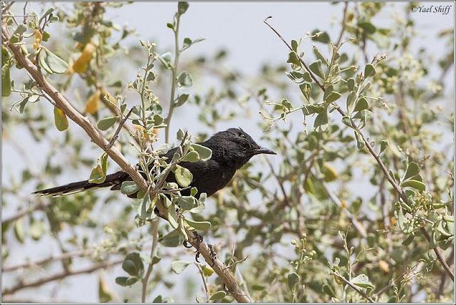 2 brit birds banged - 5 1