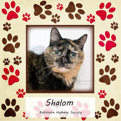 Shalom, an 11-year-old tortie cat