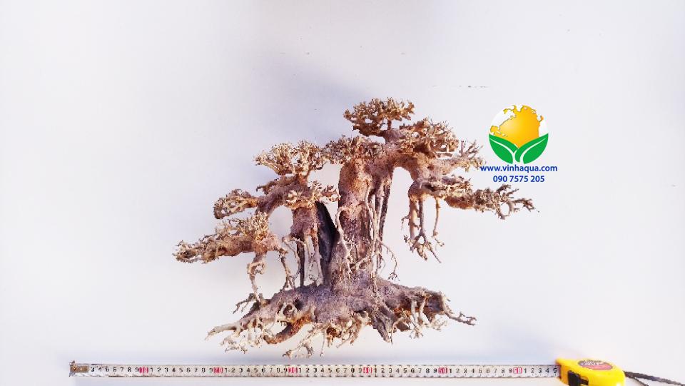 Lũa bonsai thủy sinh 850