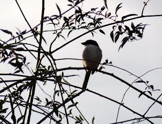 Small bird sitting on a branch shown as silhouette against the sky