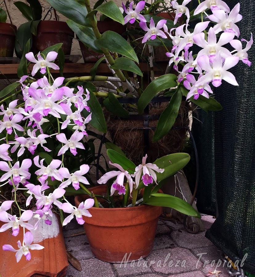 Numerosas orquídeas florecidas en diferentes sustratos