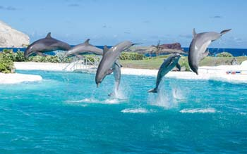Wallpaper: Dolphins Show