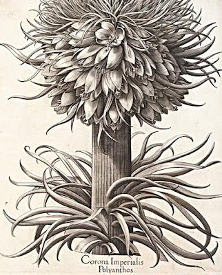世界遺産 キュー王立植物園所蔵 イングリッシュ・ガーデン 英国に集う花々