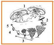 BIOLOGI GONZAGA: SOAL BIO SMA