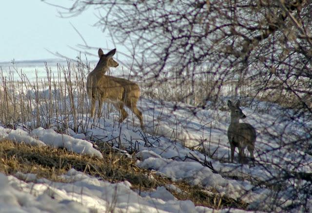 Discount Tire Pocatello >> Farm Bureau Mutual Insurance Company of Idaho: Pocatello-Inkom Deer Fence Funds Matching Program ...