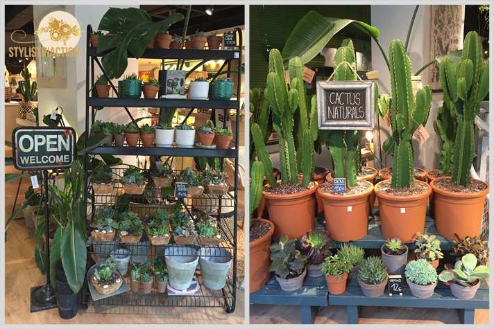 Tiendas deco en Bacelona. Natura Casa. Cactus y suculentas encreibles