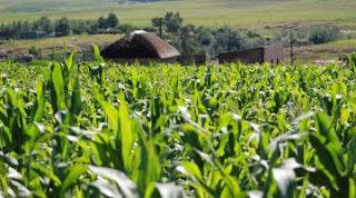 las-5-tendencias-agricolas-2016