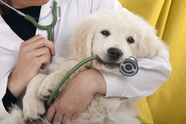 Obcinanie pazurów u psów