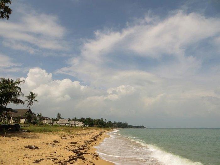 Пляж красивый с пальмами