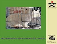 enfermedades-parasitarias-del-conejo