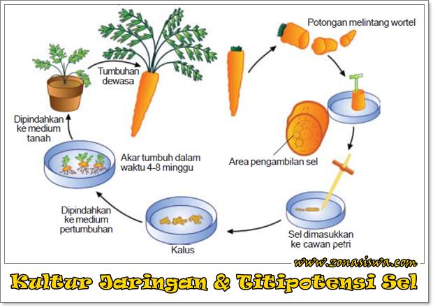 Image Result For Cerita Dalam Bahasa Inggris Dan Indonesia