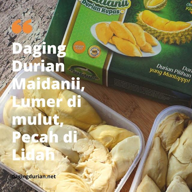 pabrik-daging-durian-medan-ternikmat-di_21