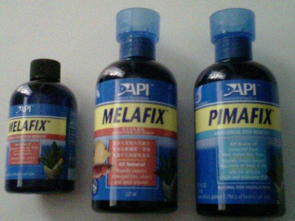 MELAFIX dan PIMAFIX - betta fighter madiun