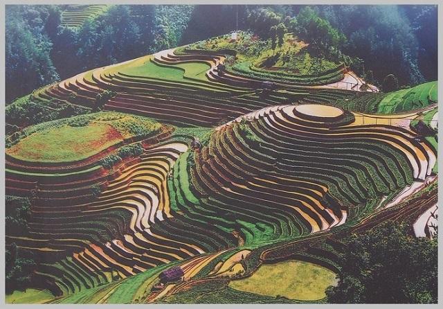 建築模型のコンタよりコンタな地形?世界にある美しい棚田3つ サパの棚田 ベトナム