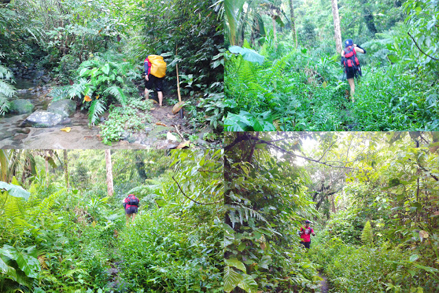 Trekking in the Woods of Busay