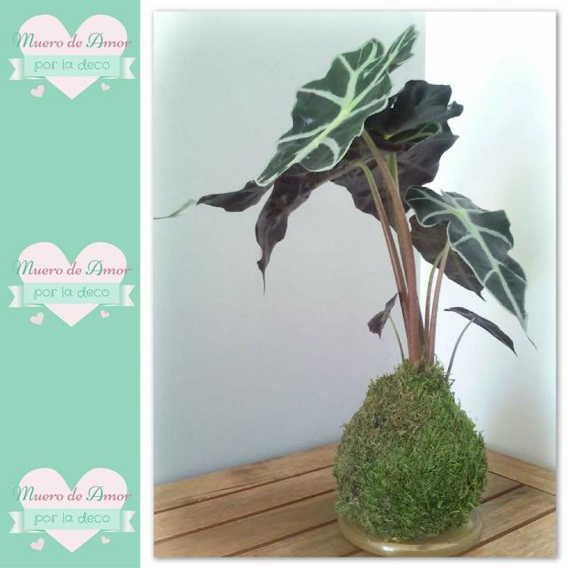 Plantas naturales sin maceta de VERDEARTE-By Ana Oval-5