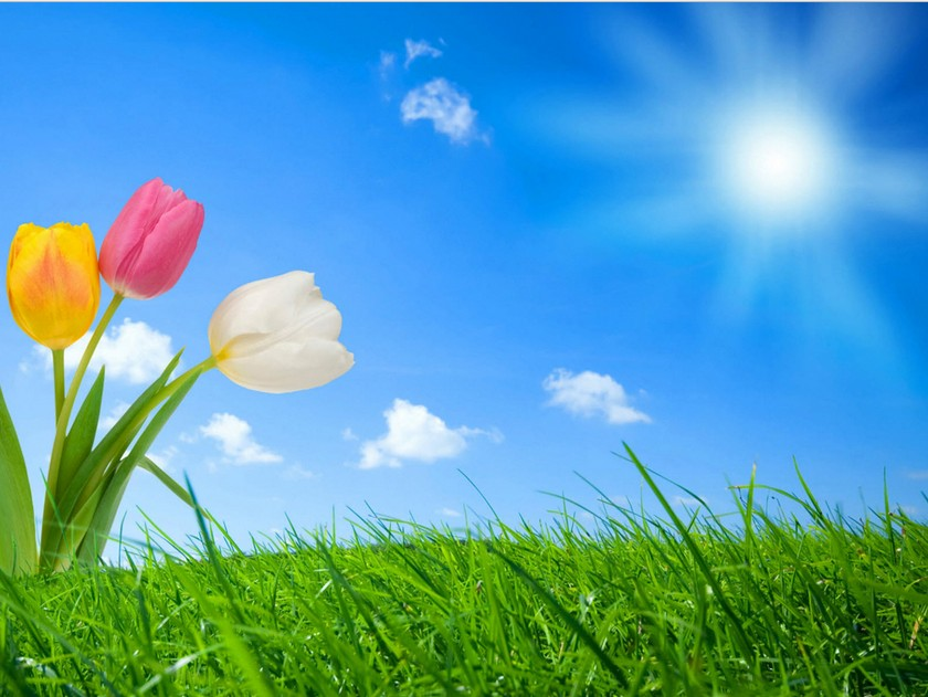Spring-nature-Wallpaper