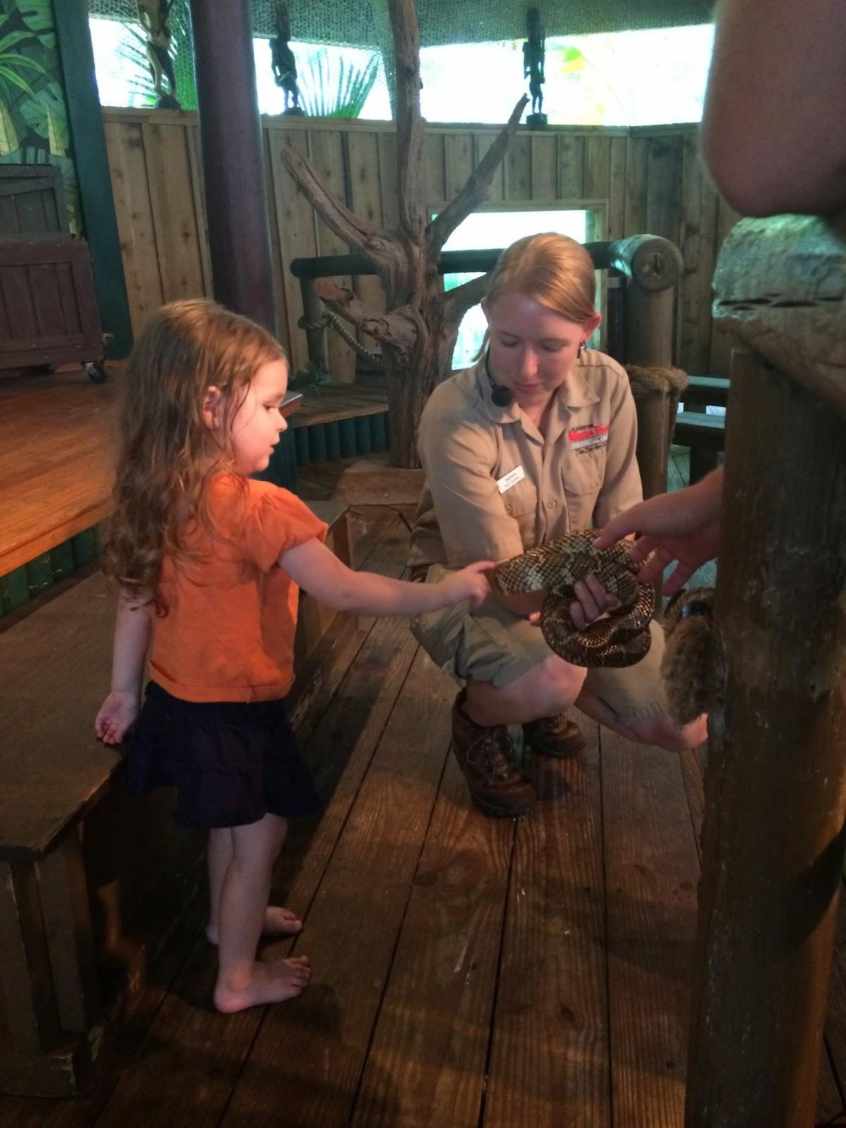 petting snake St. Augustine Alligator Farm #jaxblogger #flblogger #ivysvariety