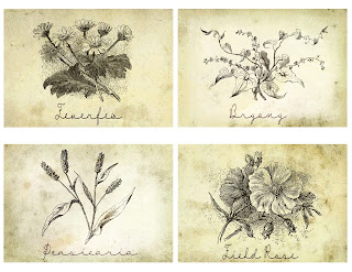 collage flower botanical artwork antique illustration crafting
